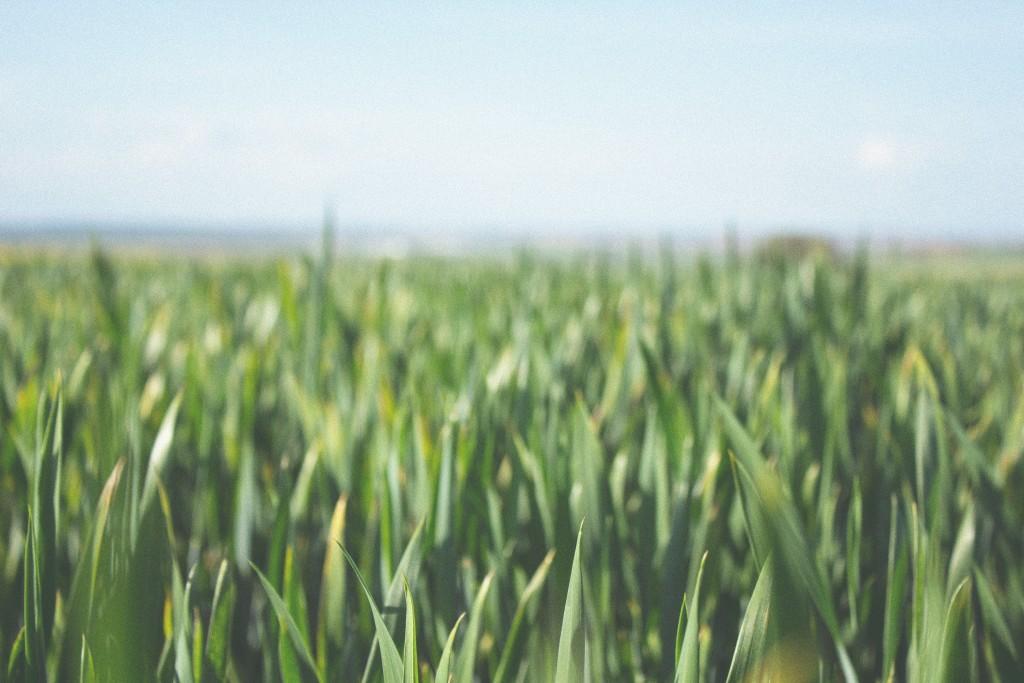 aceable-urban-roots-farm
