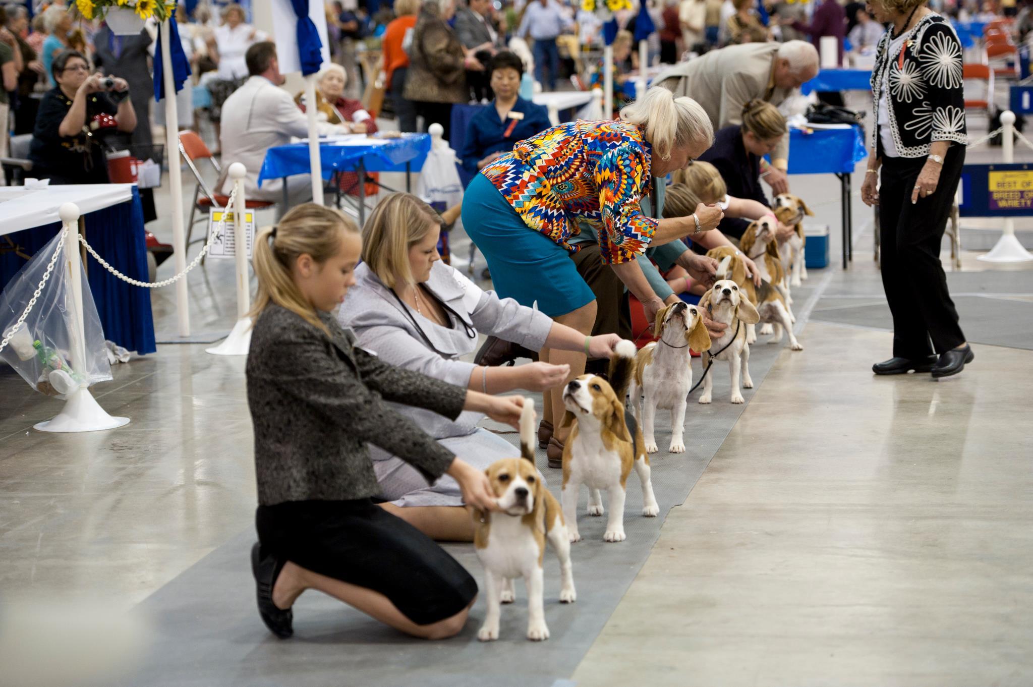 houston world series dog shows