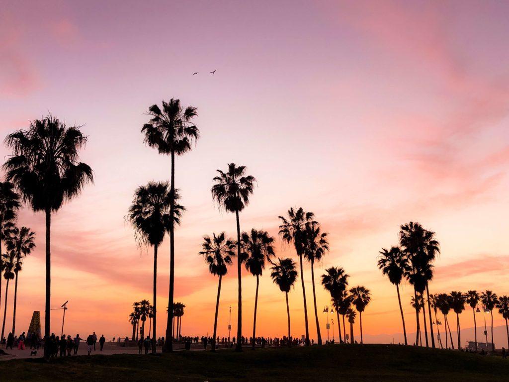 California palms