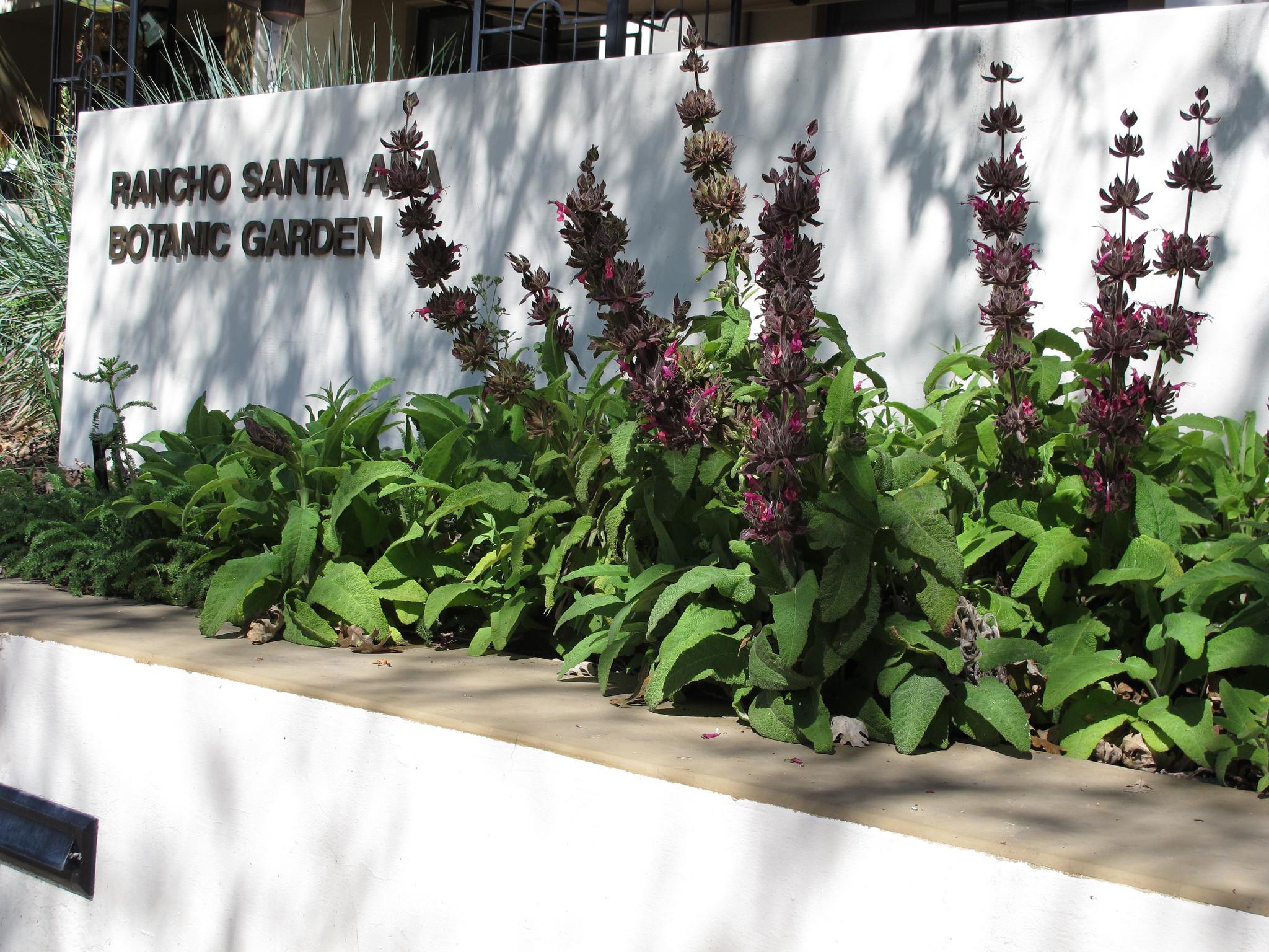 rancho santa ana garden