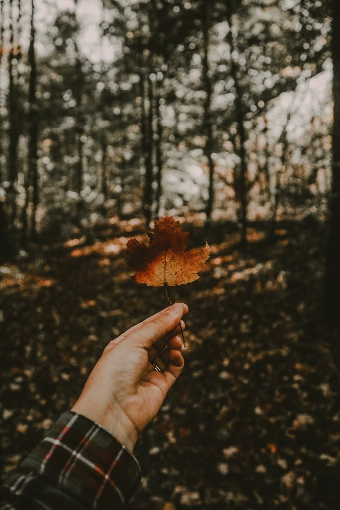 fall activities ohio