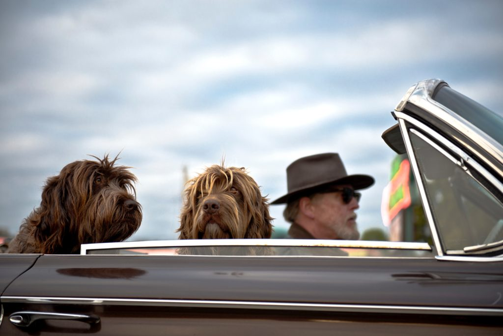 road trip with dogs